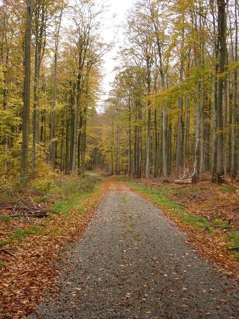 Waldweg in Bayern